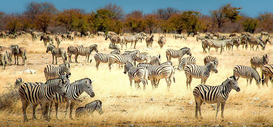 African Explorer: Namibia per Zug entdecken!